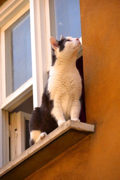 ロマンチック街道の猫旅「小さな町の魅力編」ーーアウクスブルグの世界最古の福祉施設と猫たち