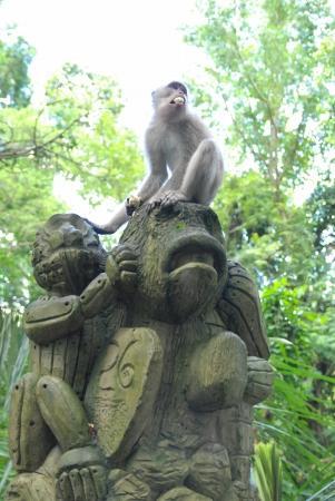 Bali * モンキー・フォレスト