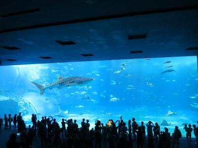 カフーいっぱいの琉球旅☆6 ちゅら海水族館とフクギ並木