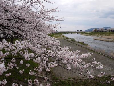 角館と大仙市に行ってきた~桜・さくら・サクラ