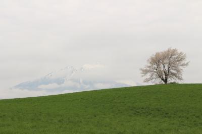 東北・一本桜をめぐる旅、のはずでした。小岩井農場の一本桜とその周辺、+鶴の舞橋 その2