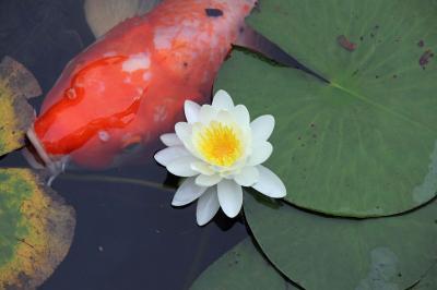 金賞のバームクーヘンと睡蓮と鯉と、お気に入りのカフェでランチも♪one day drive in 広島・廿日市市