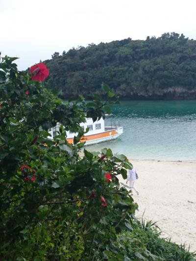緑に癒される! 4月の石垣島