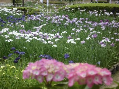 亀山城と花しょうぶ