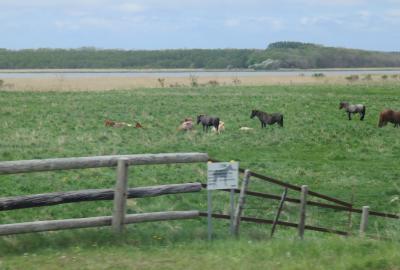 2016春、花と新緑の道東巡り(10/26):5月29日(6):小清水原生花園、展示館の写真パネル、野鳥、野草、放牧の馬
