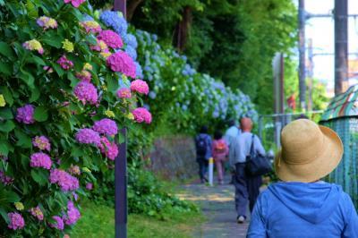 王子 飛鳥山下の紫陽花を見たくて 下