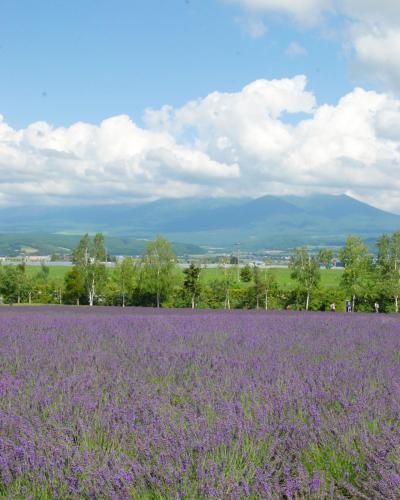 北海道*富良野のラベンダー~美瑛 白金の青い池