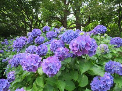 新緑の多摩川~田園調布を歩いて初夏を見つける