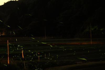 大阪府高槻市の某所ホタル撮影行ってきました 【2016 高槻ホタル 最新情報】