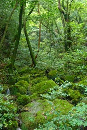 屋久島*白谷雲水峡