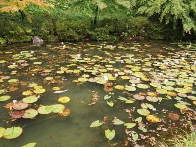 鮎と生ハムモネの池