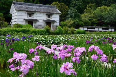 梅雨の遠州花巡り【速報版】~昔ながらの庄屋屋敷が優美な紫色に彩られ・・・花菖蒲の名所「加茂荘花鳥園」へ♪~