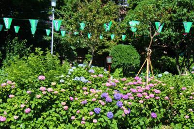 白山神社~小石川植物園