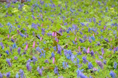 ワッさむ~三笠山自然公園カタクリと旭川歴史的建造物を訪ねて(北海道)