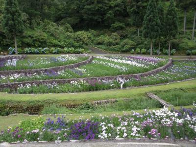 播州山崎花菖蒲園を訪ねて
