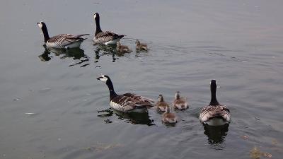 ウェールズと南イングランド周遊(61) ツアーオプションは、水の中の美しいリーズ城の観光 中巻。