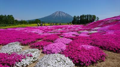 札幌から気楽に行けるピンク色の絨毯