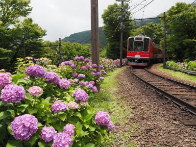 紫陽花鑑賞と富士屋ホテルでのフレンチディナーを優雅に楽しむ。