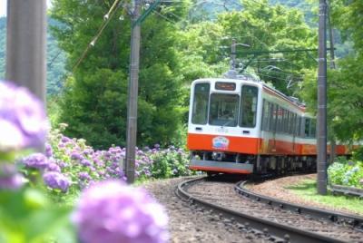 あじさい電車 2016