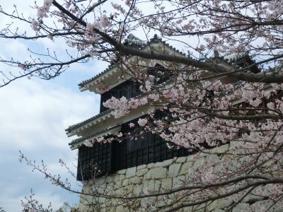 松山城で桜を堪能