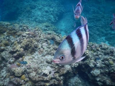 阿嘉島で釣りとシュノーケル三昧3日目~北浜ビーチと書いてニシバマビーチと読む