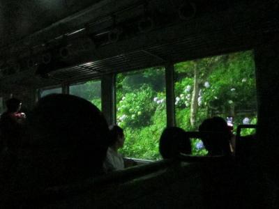 「あじさい電車」に乗って箱根のあじさい観光