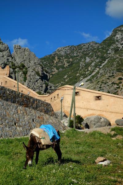 白い街に青い街、コルドバのパティオ祭りにフェズのリアド巡り!雨のアンダルシアとプチ・モロッコ旅⑮(シャウエン2日目とフェズへの移動編)