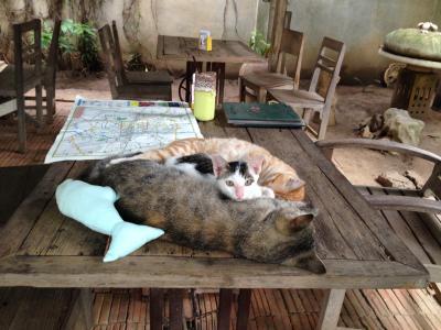娘の海外研修に便乗! 2015 夏 チェンマイで猫三昧