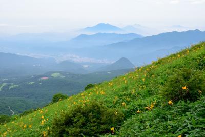 梅雨の合間にぷらっと日光へお出かけ【速報版】~霧降高原を可憐に彩るニッコウキスゲを愛でる~
