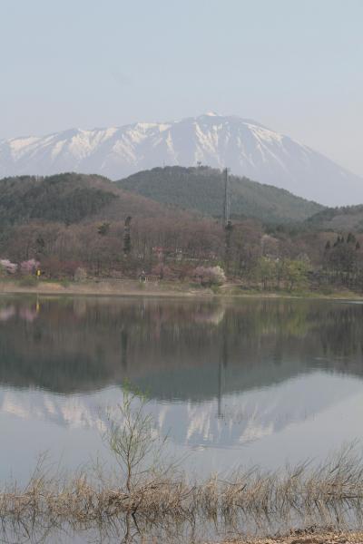 北東北地方の桜とカタクリと水芭蕉を求めて(御所湖・雫石川園地)