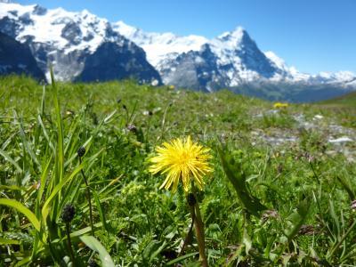 2016年6月スイス ヴェンゲンで暮らすように旅した1週間 総集編