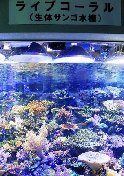 名古屋港水族館1/6 シャチ・イルカが北館大水槽に ☆サンゴ礁~南極海も