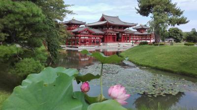 「宇治・和束」 日本遺産の和束の茶畑、世界遺産の平等院と宇治上神社と宇治周遊の旅