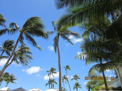 陰陽道:ハワイ・oahu島 動画有 ストレッチ・リムジン、ディズニー、ウィンダム、ヒルトン、マリオット・シェア物件