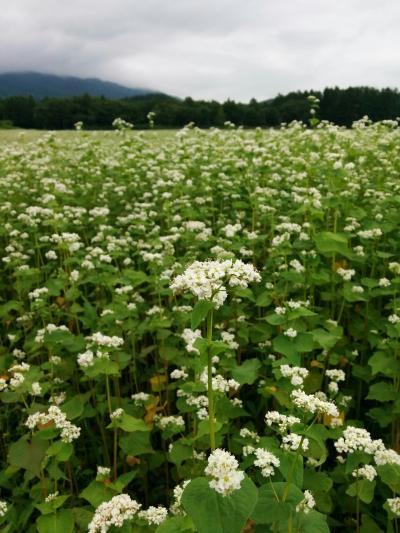 ひろ🐵たま🐗の初夏の北海道ロングステイしよるんよ~ 羊蹄山、そばと水の物語(倶知安)編
