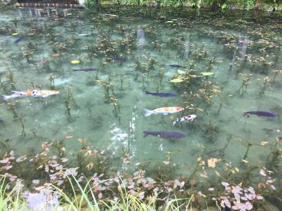 モネの池に行きました!