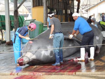 千葉県はディズニーリゾートだけではない・房総和田浦でクジラの解体を見学する。