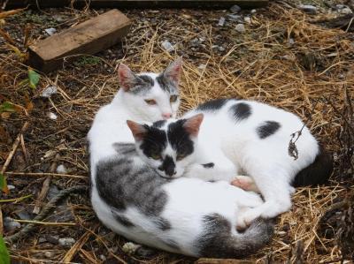 【猫鐡3】笠戸島・平郡島・祝島編