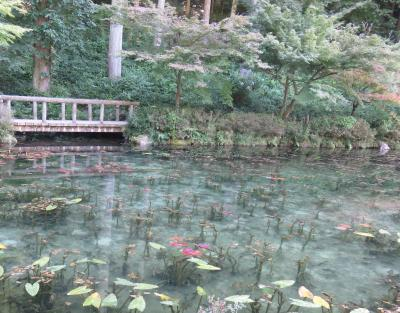 最近話題の岐阜モネの池