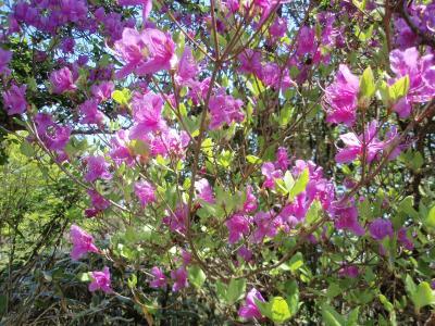 六甲山系(5月初)で出会った花々