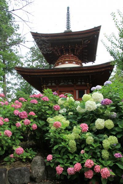 久米寺であじさい観賞。「古事記」を編纂した太安万侶、稗田阿礼に縁のある多神社(おおじんじゃ)、賣太神社(めたじんじゃ)を参拝しました。龍田神社にもお参りしました。
