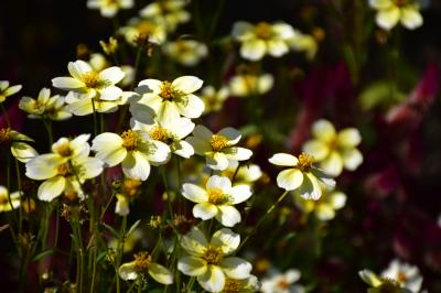 花と緑の夢あいち2015