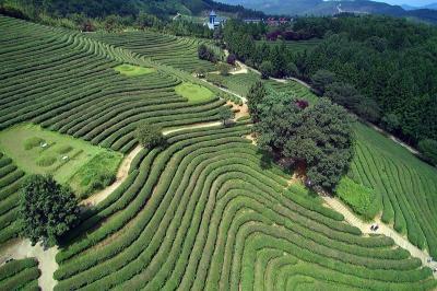 美しい景色と韓国の伝統美が共存する、全南・宝城(ボソン)