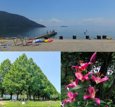 びわこ箱館山ゆり園とランチバイキング、マキノ緑のメタセコイヤ並木道へ