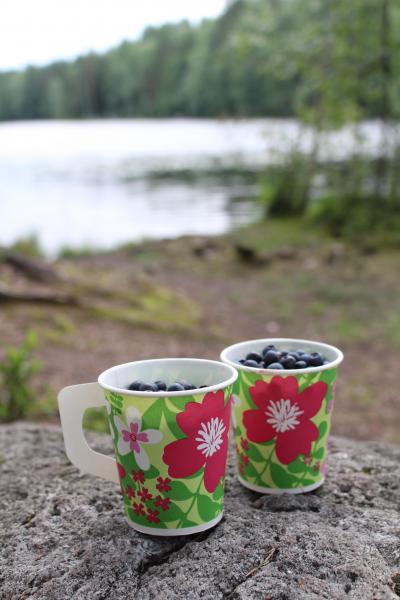 暮らす気分でヘルシンキ2016夏/Day1-2 夜の森でブルーベリー狩り