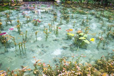 とんでもなくキレイすぎたなモネ池よ…