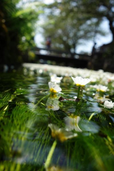 夏・琵琶湖1周 18切符【水中に咲く花、梅花藻の地へ編】