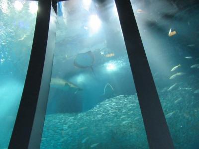 八景島シーパラダイス 可愛いイルカに癒されました
