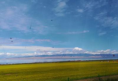 シルクロード南ルート一人旅 (菜の花の青海湖)