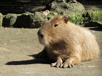 一部リニューアルした大宮公園小動物園を再訪